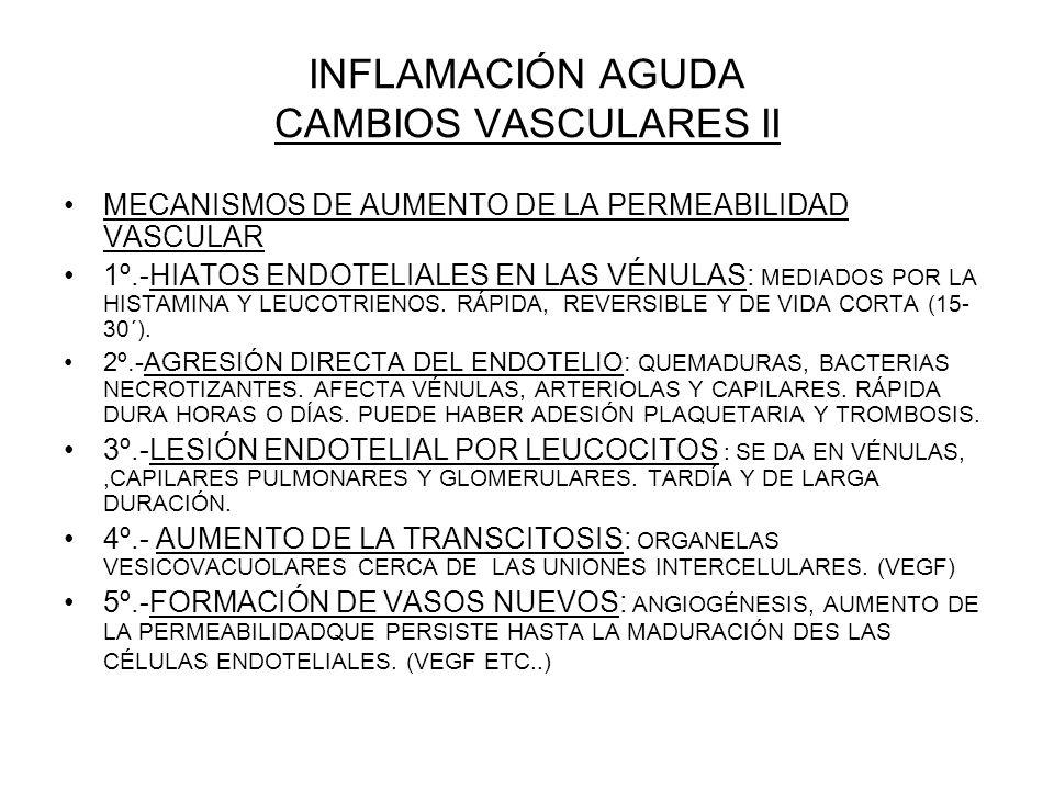 INFLAMACIÓN AGUDA CAMBIOS VASCULARES II
