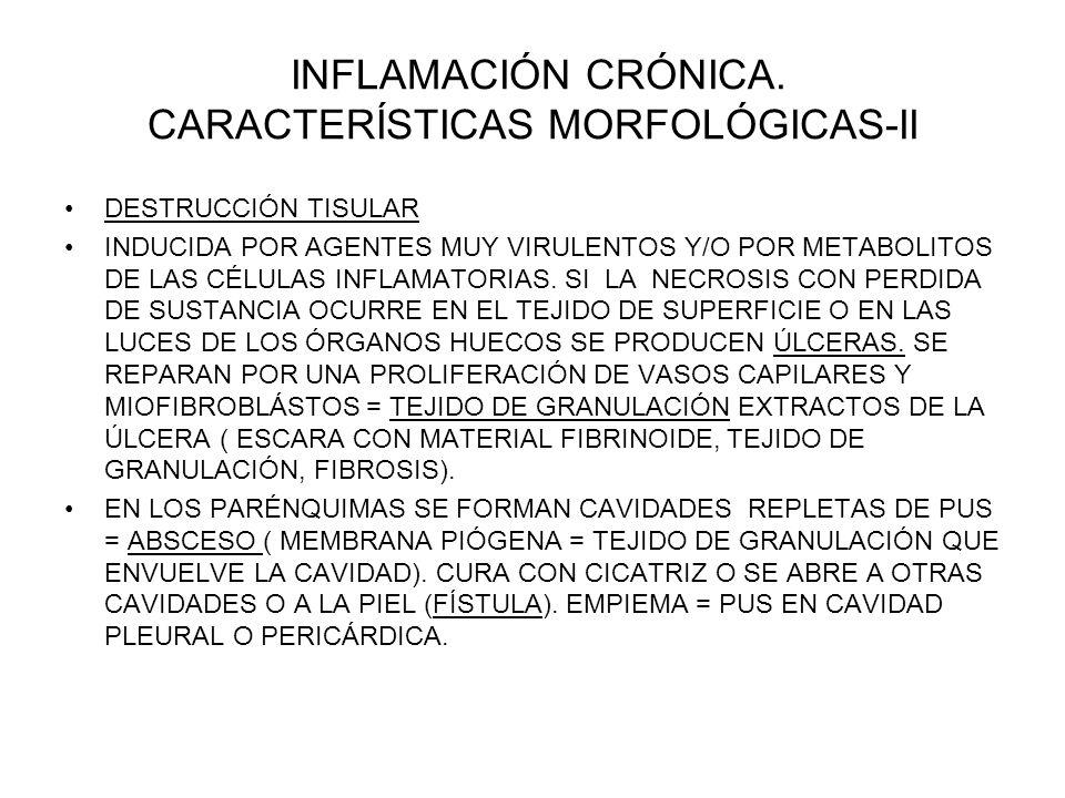 INFLAMACIÓN CRÓNICA. CARACTERÍSTICAS MORFOLÓGICAS-II