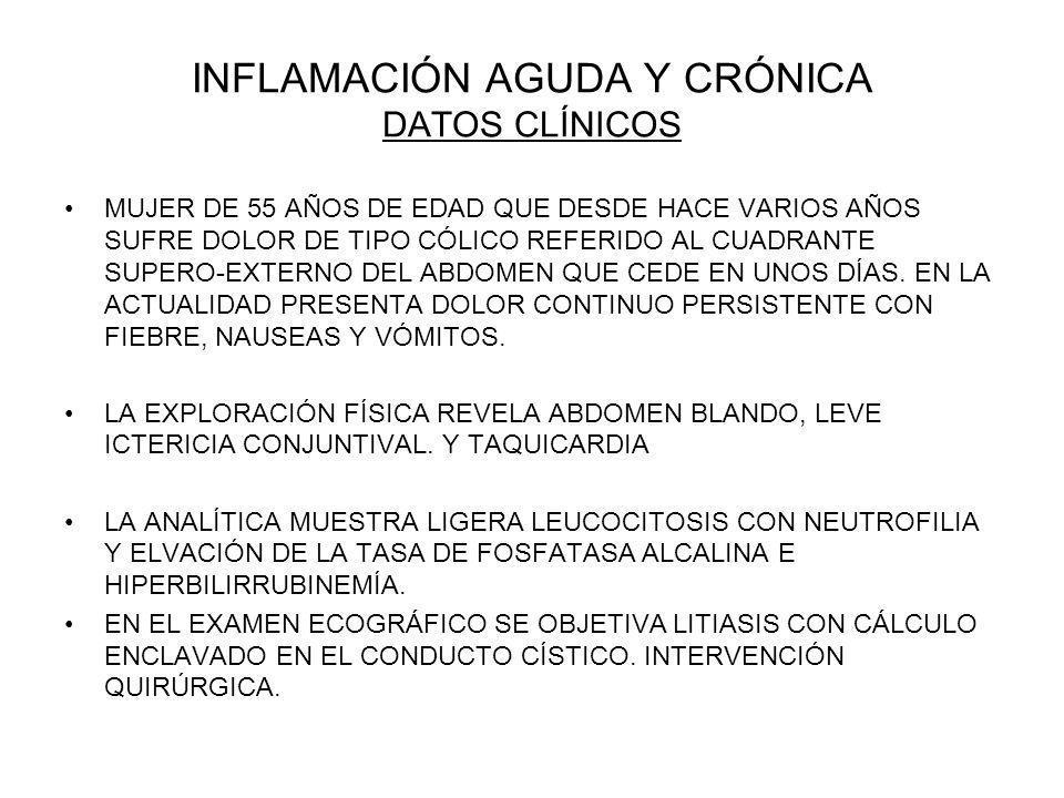 INFLAMACIÓN AGUDA Y CRÓNICA DATOS CLÍNICOS