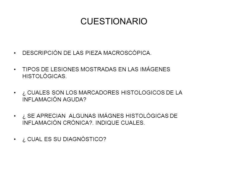CUESTIONARIO DESCRIPCIÓN DE LAS PIEZA MACROSCÓPICA.