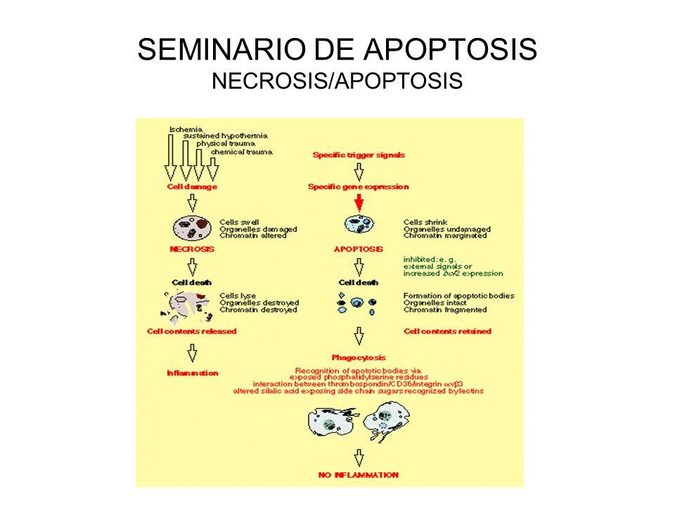 SEMINARIO DE APOPTOSIS NECROSIS/APOPTOSIS