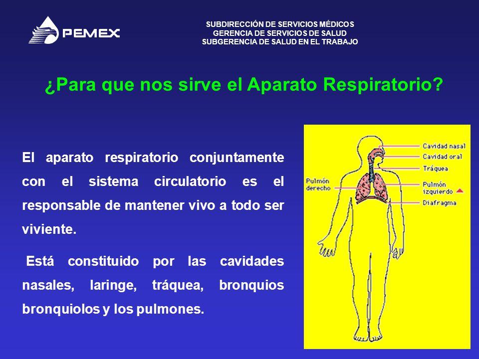 ¿Para que nos sirve el Aparato Respiratorio