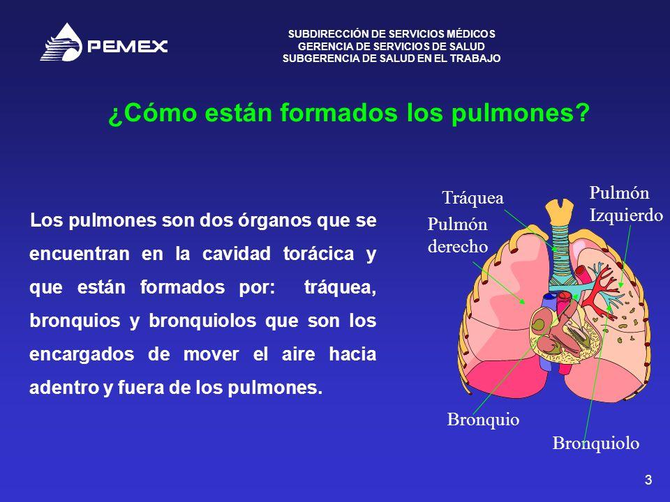 ¿Cómo están formados los pulmones