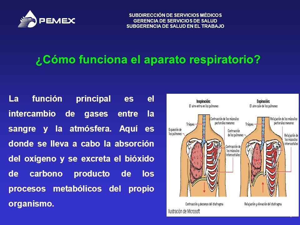 ¿Cómo funciona el aparato respiratorio