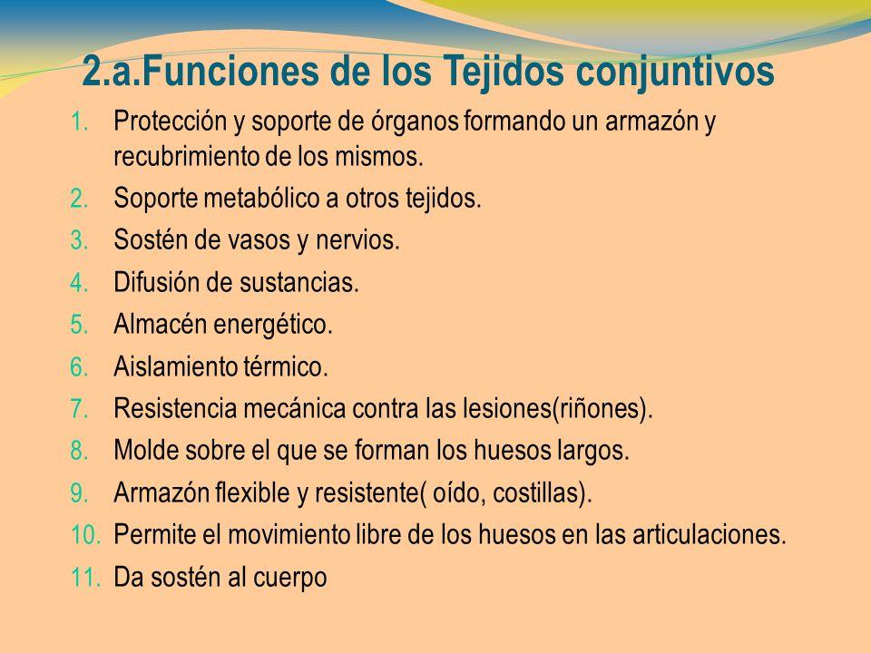 2.a.Funciones de los Tejidos conjuntivos