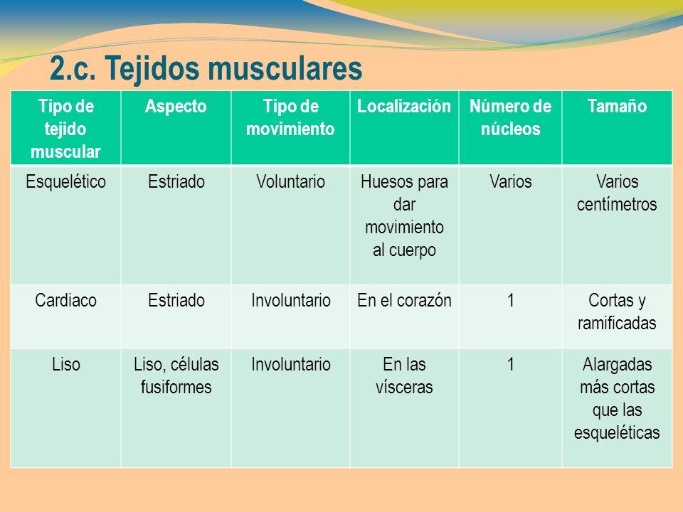 Tipo de tejido muscular