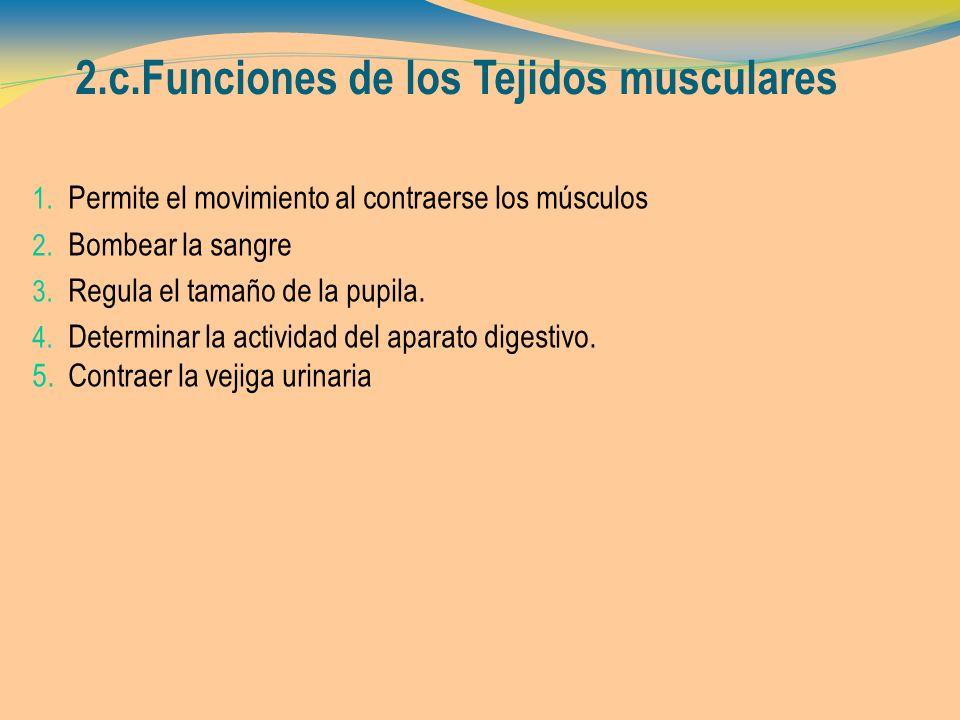 2.c.Funciones de los Tejidos musculares