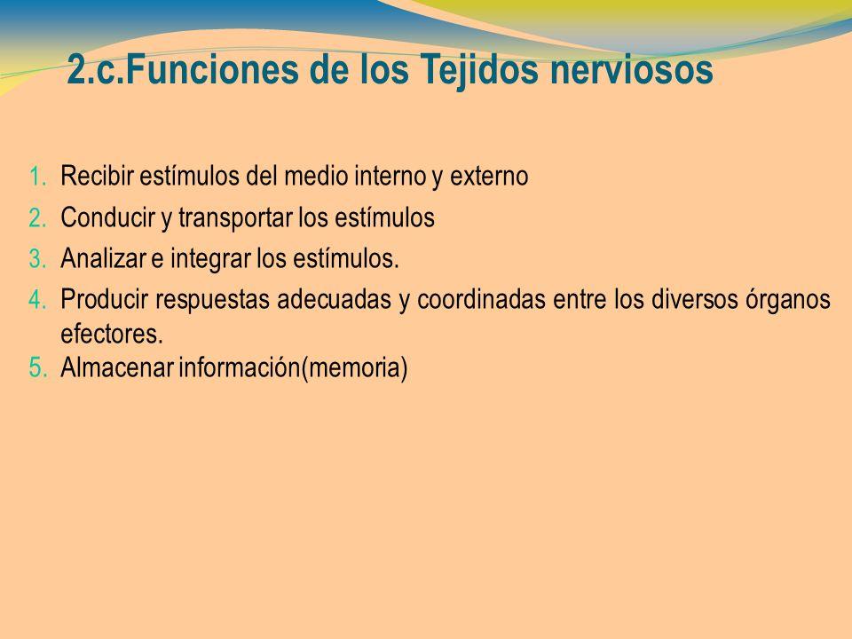 2.c.Funciones de los Tejidos nerviosos