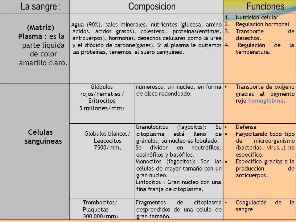 La sangre : Composicion Funciones (Matriz)