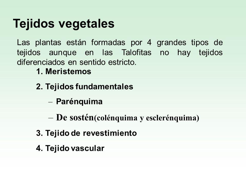 Tejidos vegetales De sostén(colénquima y esclerénquima)