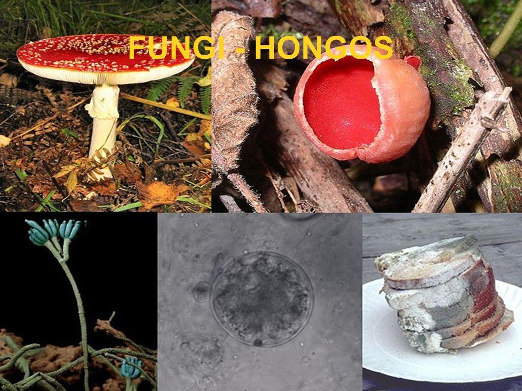 FUNGI - HONGOS