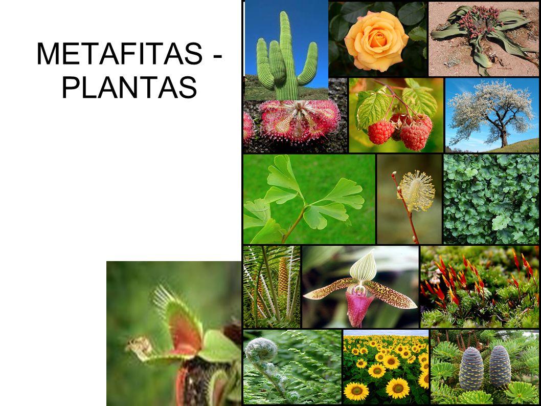METAFITAS - PLANTAS