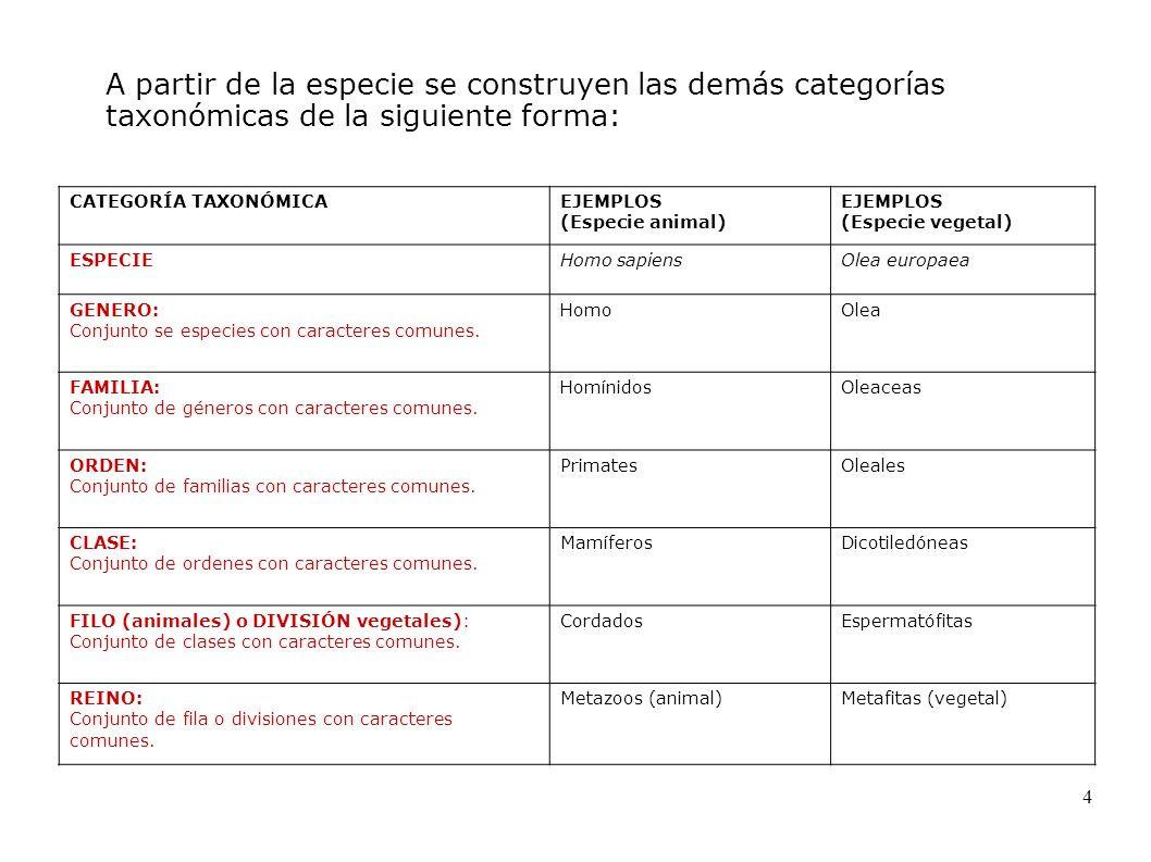 A partir de la especie se construyen las demás categorías taxonómicas de la siguiente forma: