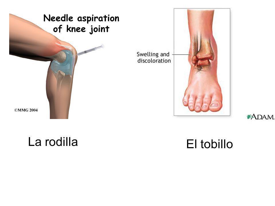 La rodilla El tobillo