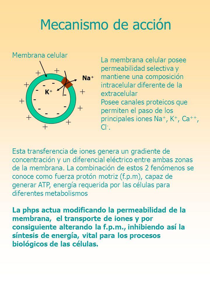 Mecanismo de acción + + - + - - + - - + - - + - - + + +