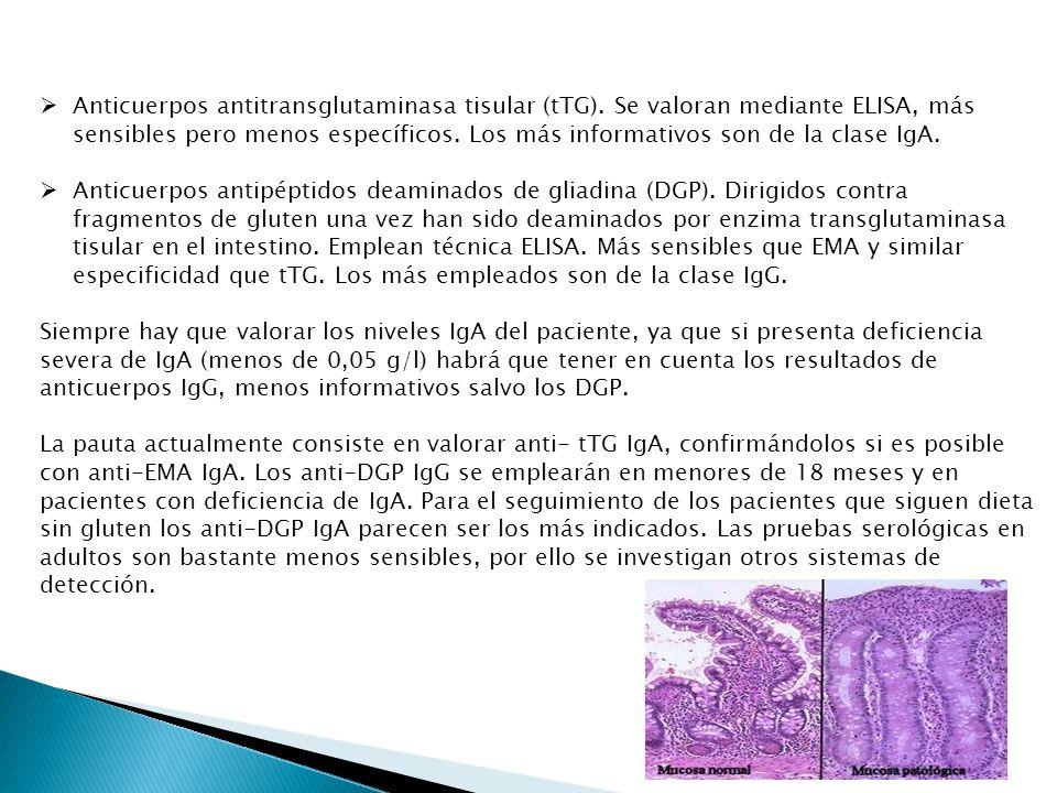 Anticuerpos antitransglutaminasa tisular (tTG)