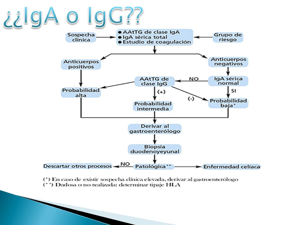 ¿¿IgA o IgG