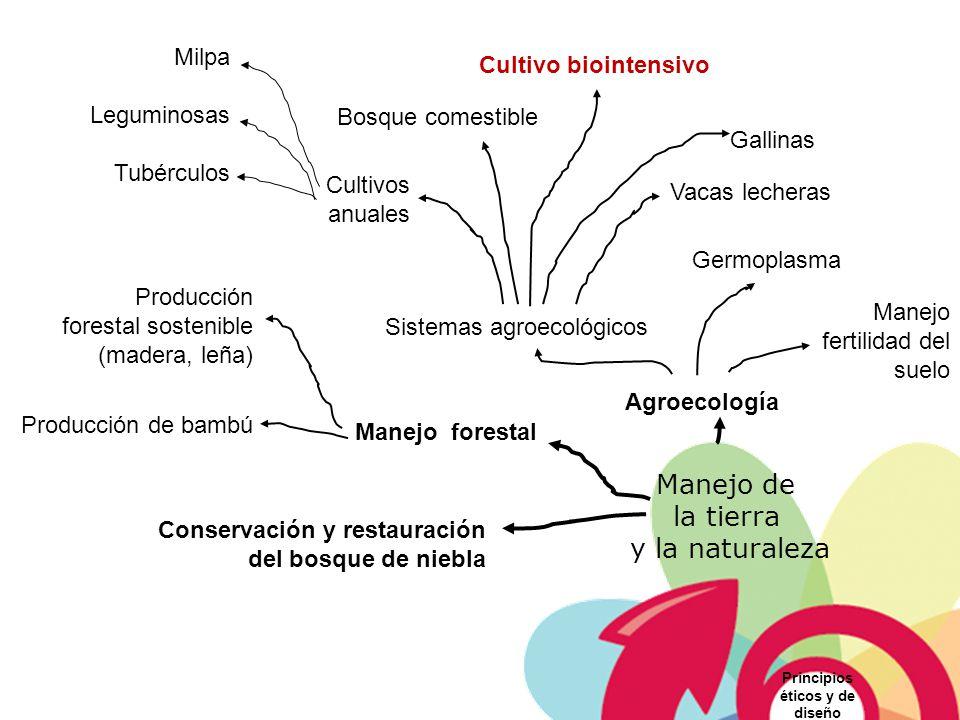 Manejo de la tierra y la naturaleza Milpa Cultivo biointensivo