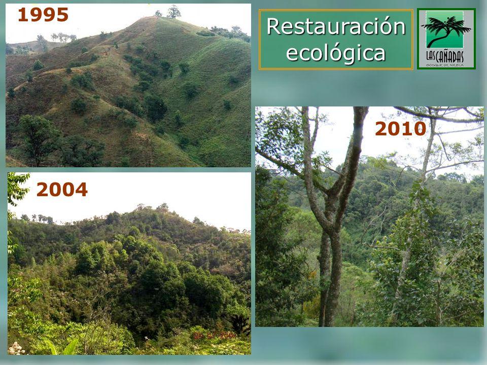 1995 Restauración ecológica 2010 2004