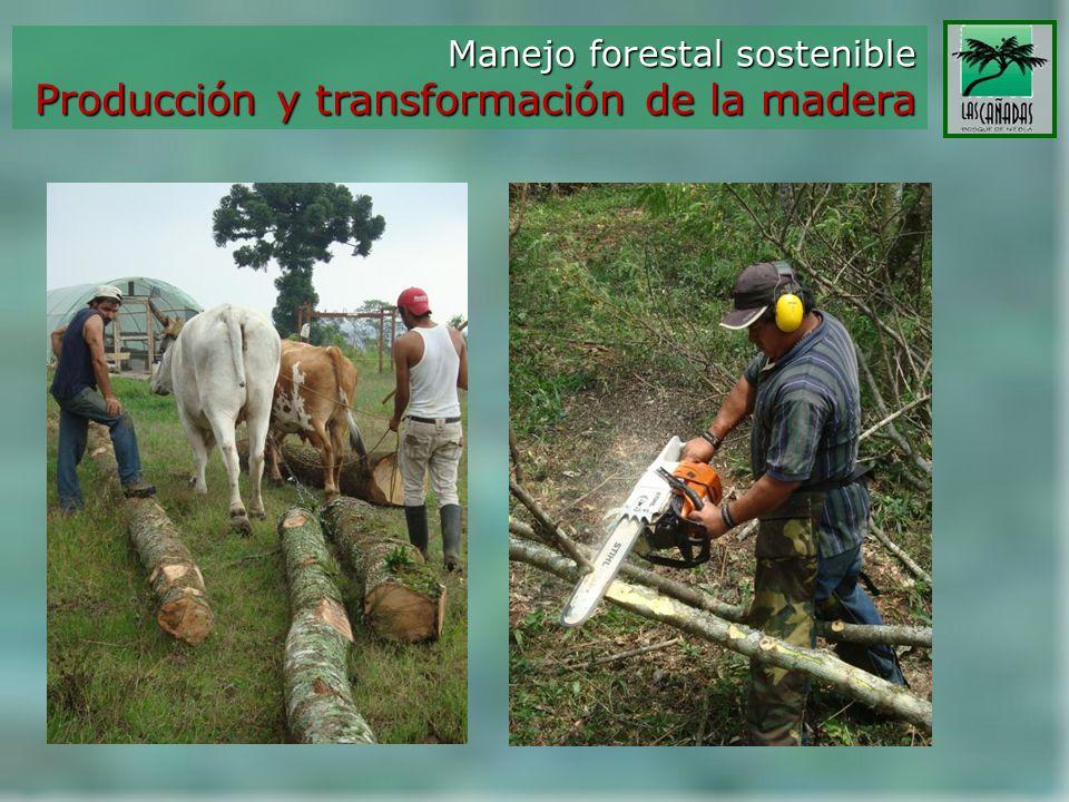Producción y transformación de la madera