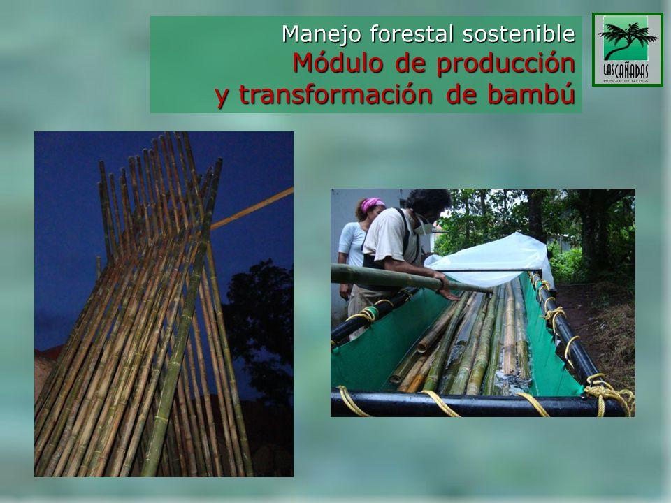 y transformación de bambú
