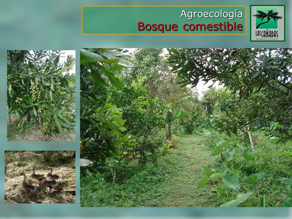 Agroecología Bosque comestible