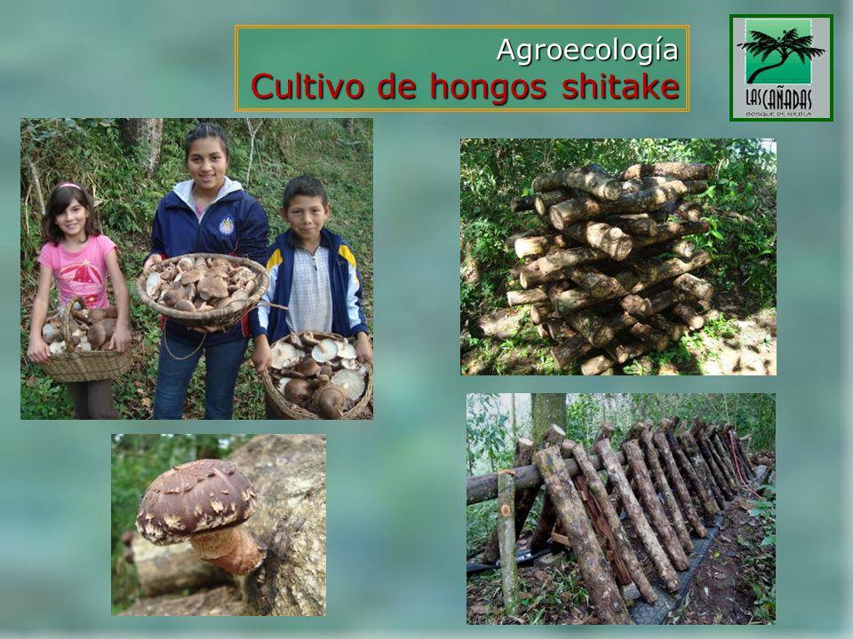 Cultivo de hongos shitake