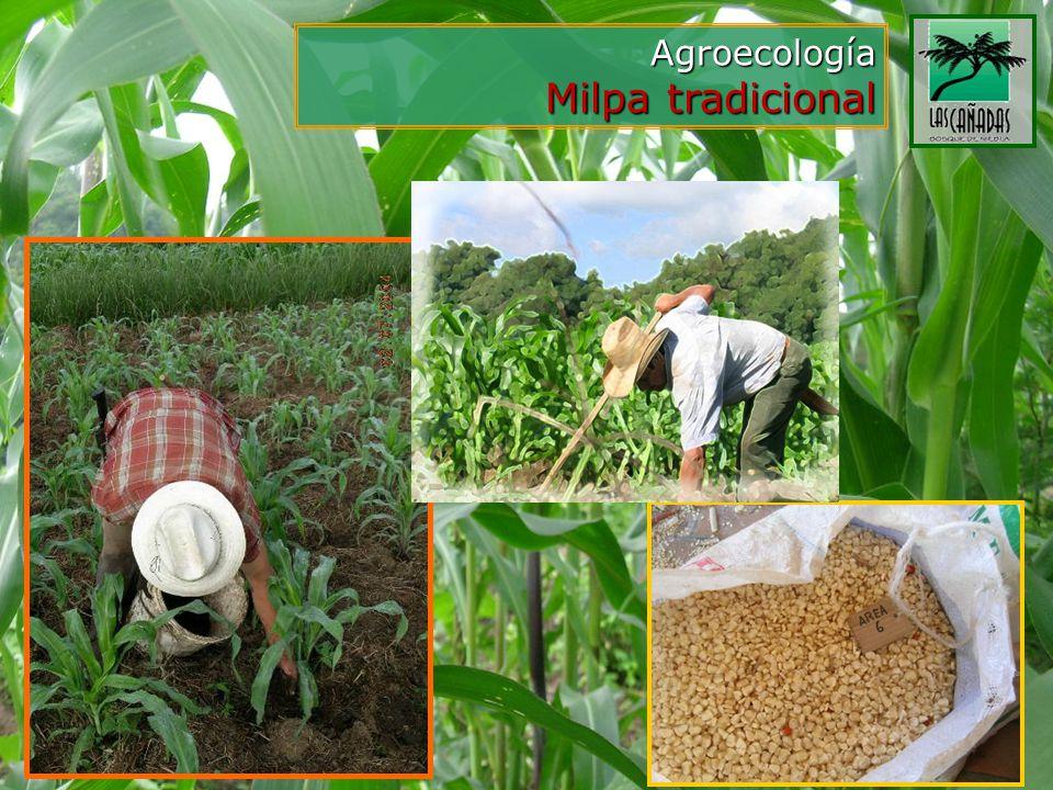 Agroecología Milpa tradicional