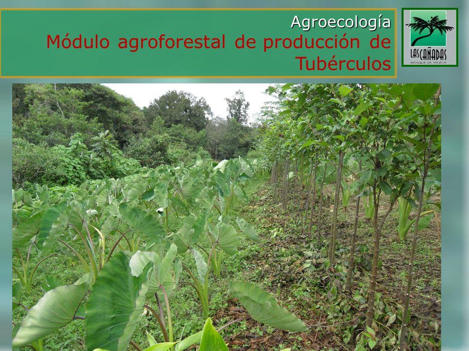 Módulo agroforestal de producción de Tubérculos