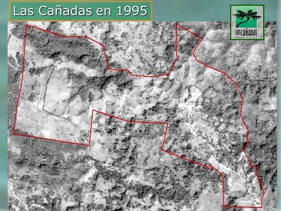 Las Cañadas en 1995