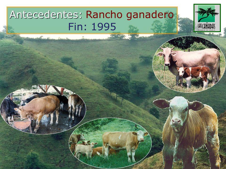Antecedentes: Rancho ganadero
