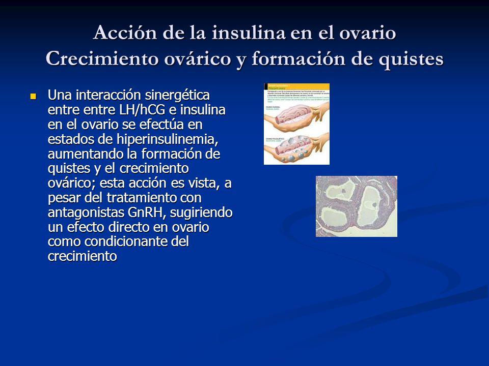 Acción de la insulina en el ovario Crecimiento ovárico y formación de quistes