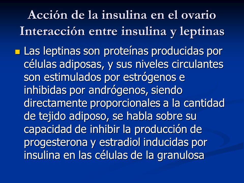 Acción de la insulina en el ovario Interacción entre insulina y leptinas