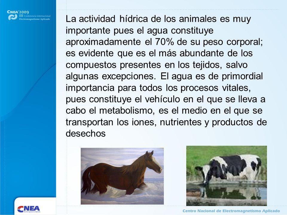 La actividad hídrica de los animales es muy importante pues el agua constituye aproximadamente el 70% de su peso corporal; es evidente que es el más abundante de los compuestos presentes en los tejidos, salvo algunas excepciones.