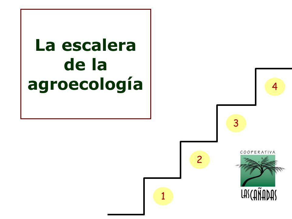 La escalera de la agroecología