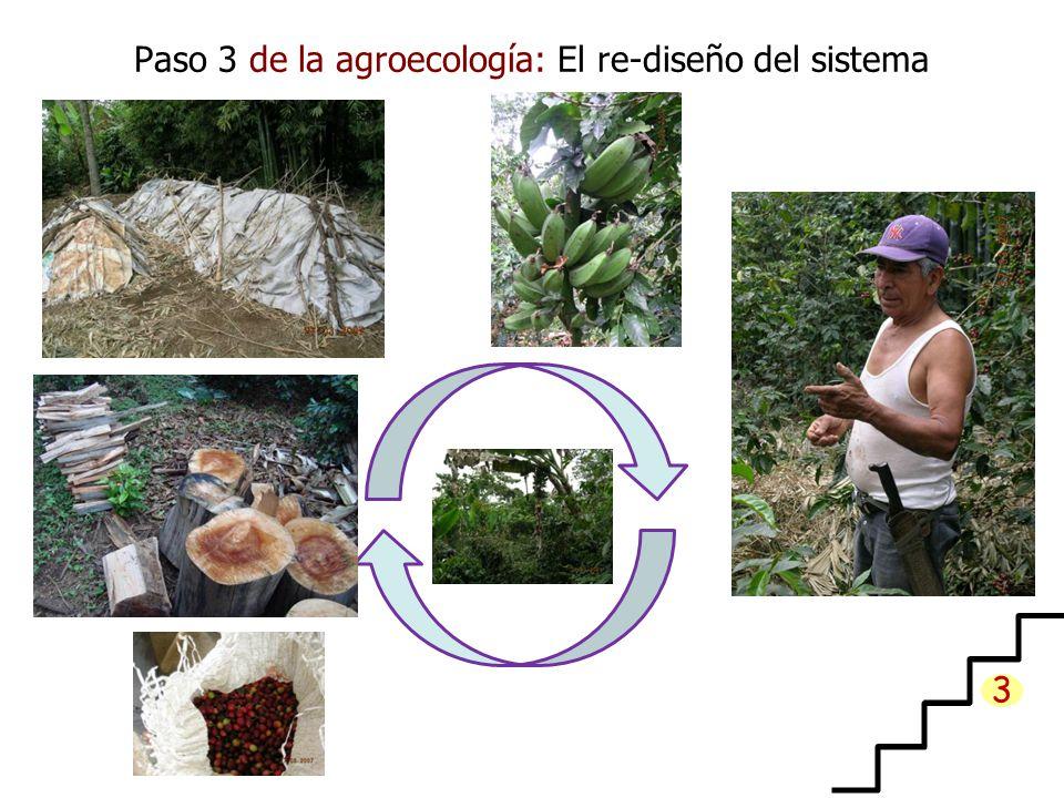 Paso 3 de la agroecología: El re-diseño del sistema