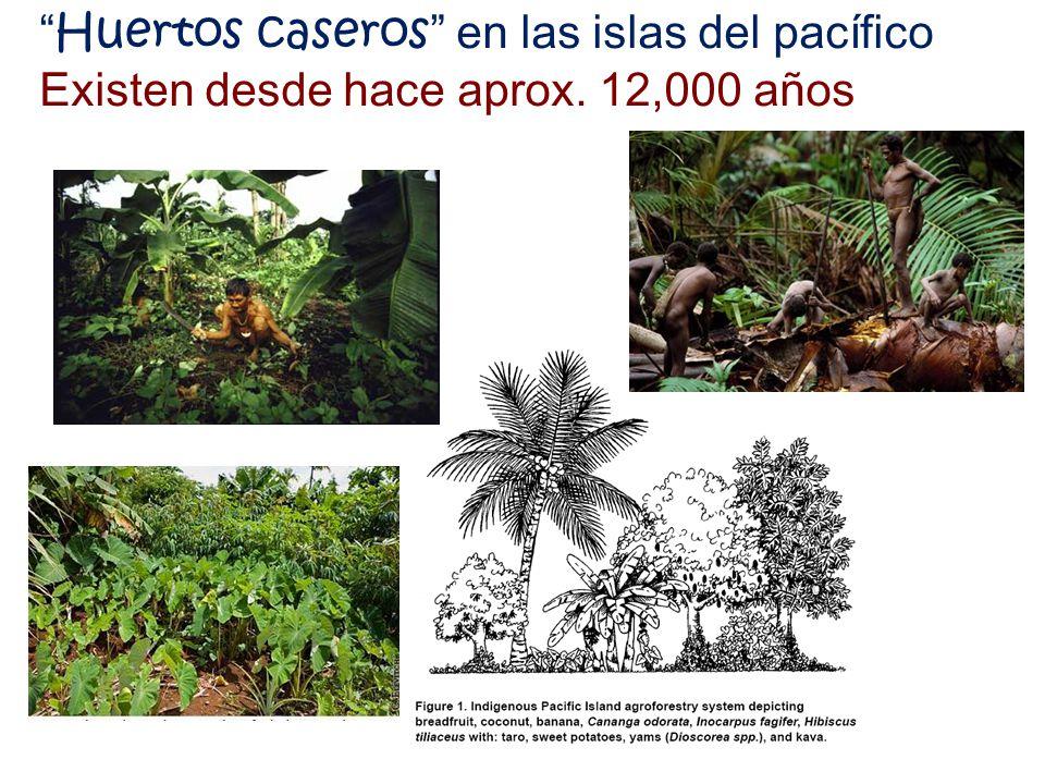 Huertos caseros en las islas del pacífico