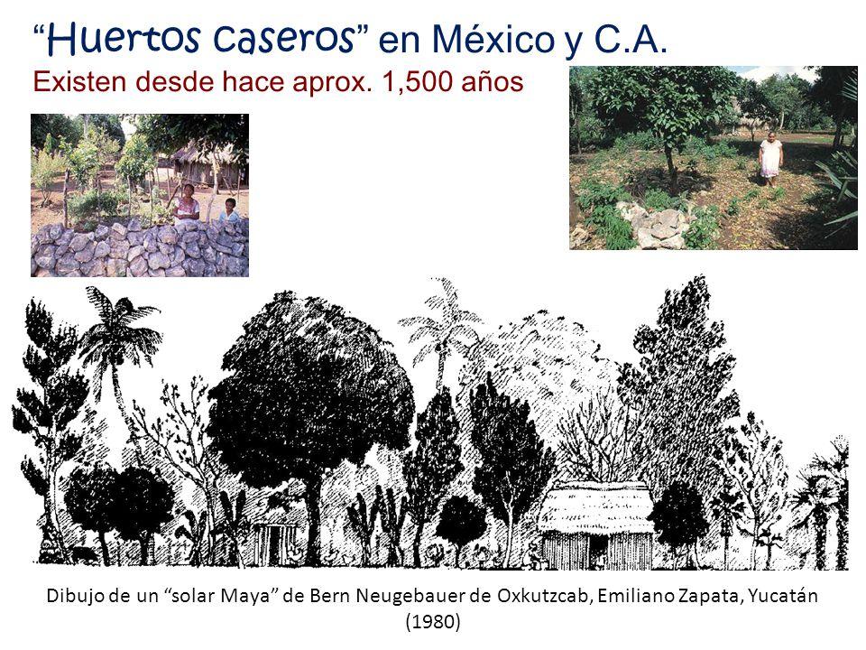 Huertos caseros en México y C.A.