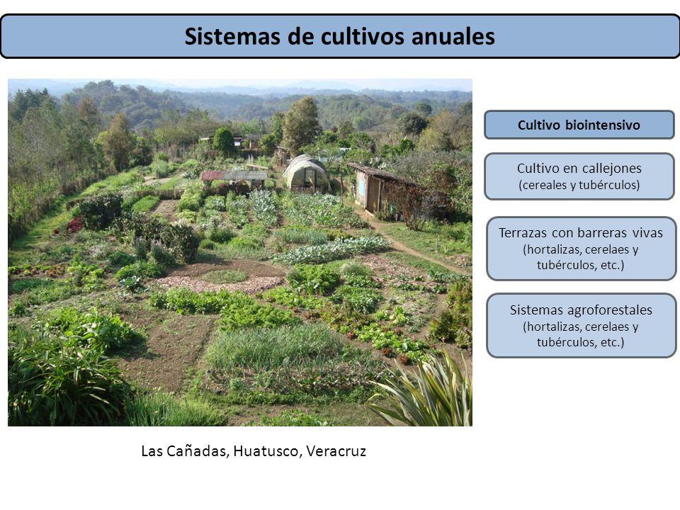 Sistemas de cultivos anuales
