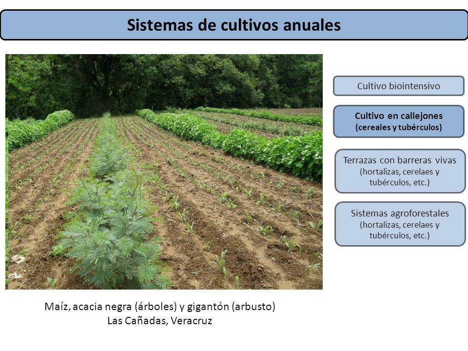 Sistemas de cultivos anuales (cereales y tubérculos)