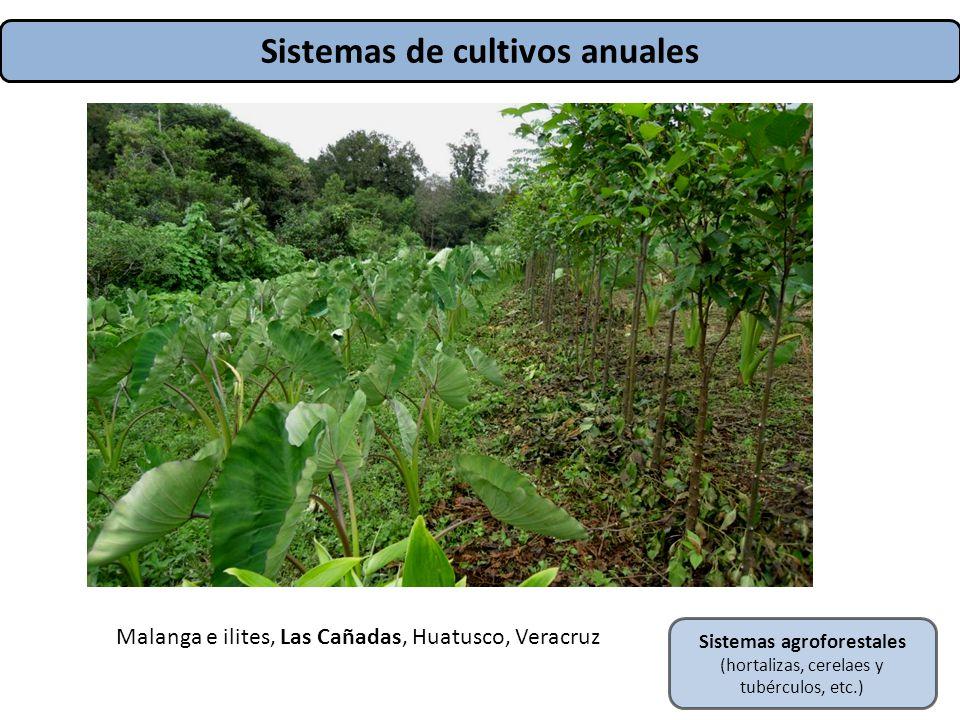 Sistemas de cultivos anuales Sistemas agroforestales