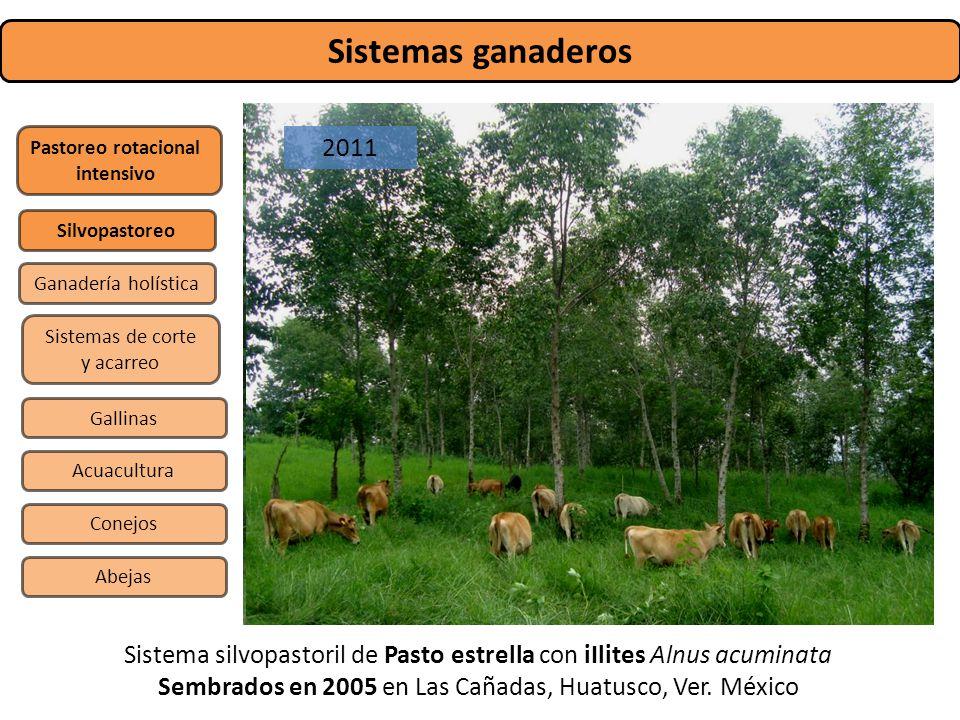 Sistemas ganaderos 2009. 2011. Pastoreo rotacional. intensivo. Silvopastoreo. Ganadería holística.