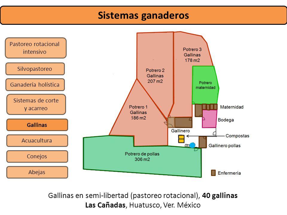 Sistemas ganaderos Pastoreo rotacional. intensivo. Silvopastoreo. Ganadería holística. Sistemas de corte y acarreo.
