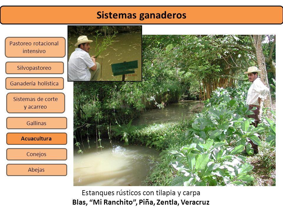 Blas, Mi Ranchito , Piña, Zentla, Veracruz