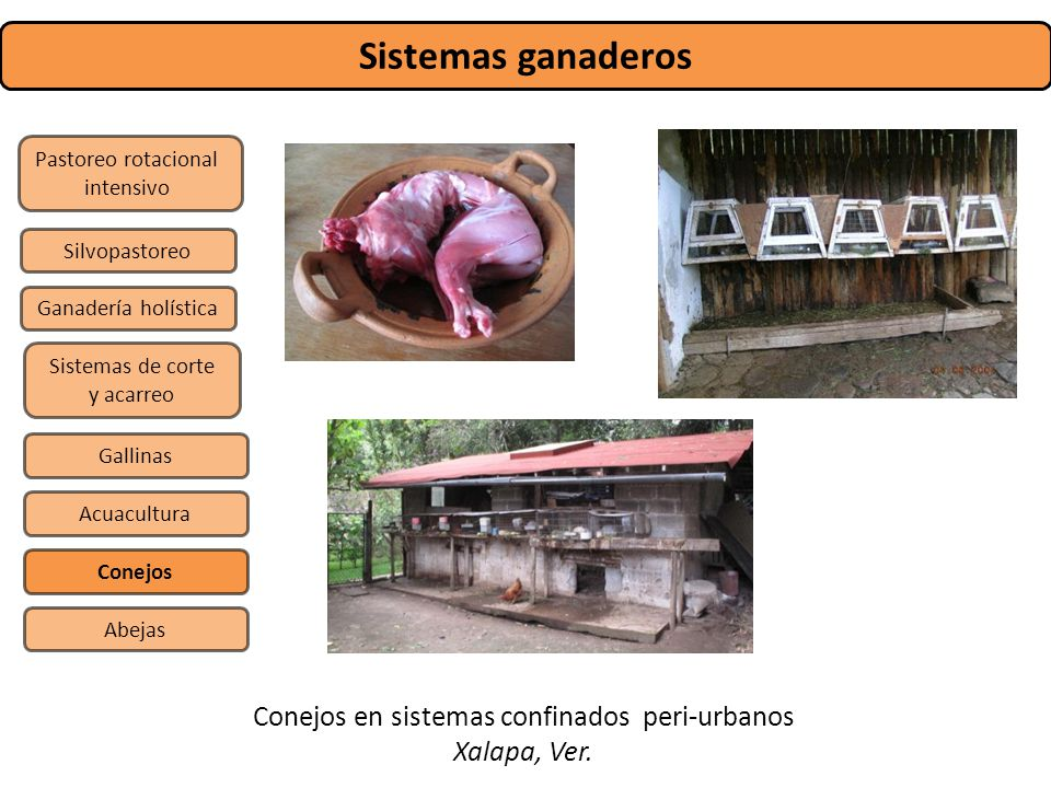Sistemas ganaderos Conejos en sistemas confinados peri-urbanos