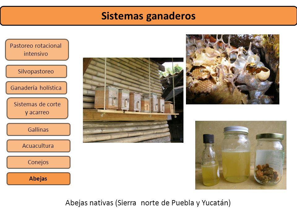 Sistemas ganaderos Abejas nativas (Sierra norte de Puebla y Yucatán)