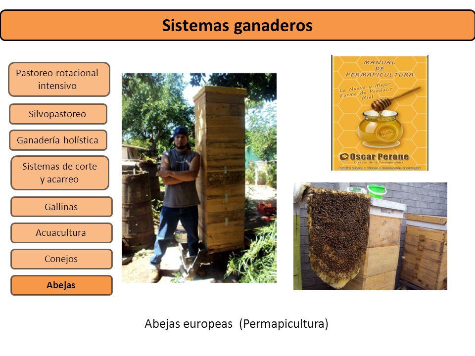 Sistemas ganaderos Abejas europeas (Permapicultura)