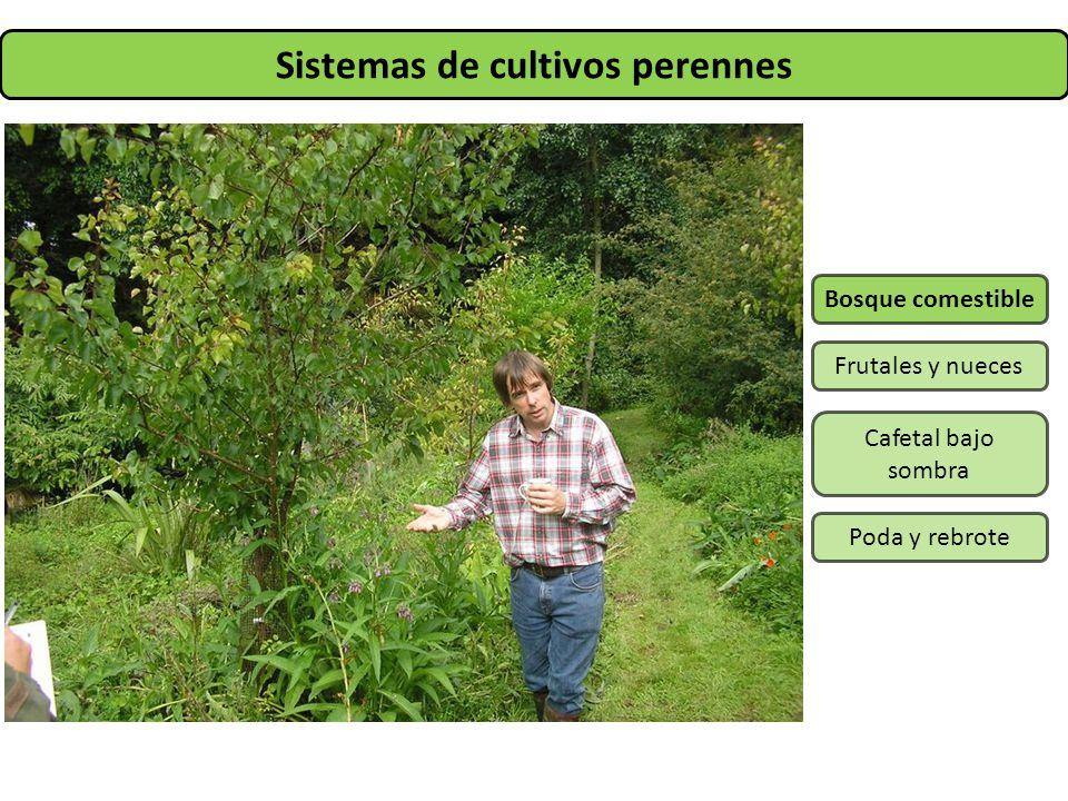 Sistemas de cultivos perennes