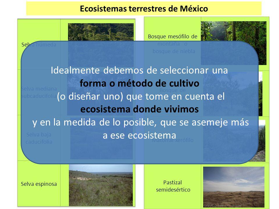 Ecosistemas terrestres de México forma o método de cultivo