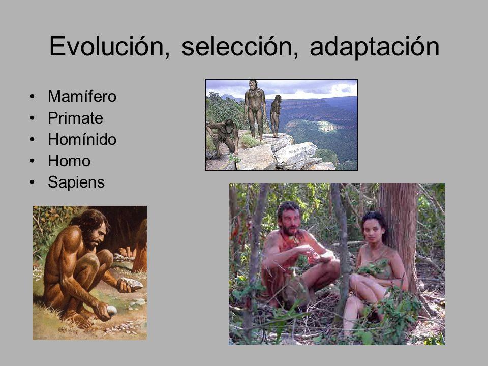 Evolución, selección, adaptación